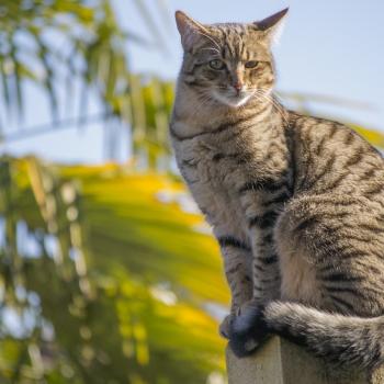 Gatto di guardia