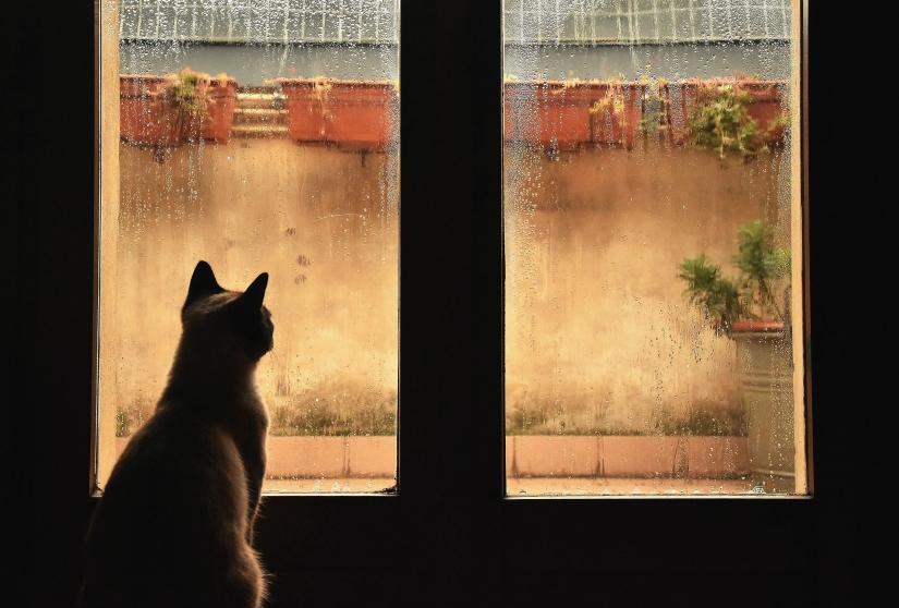 Gatto malinconico