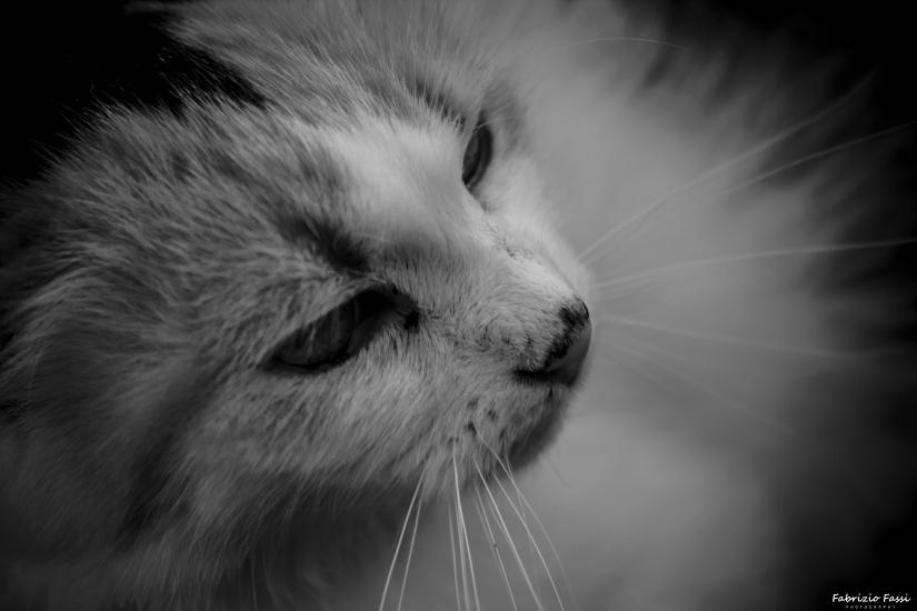 Gatto randagio croato, fotografato a Rovigno