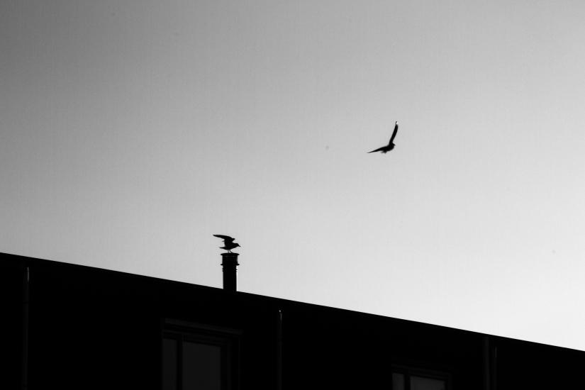 Geometric fly
