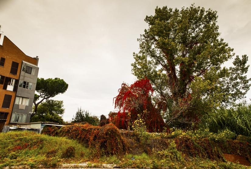 Gli alberi ci sopravviveranno