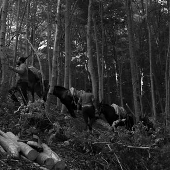 Gli ultimi boscaioli di Opi