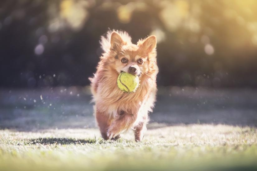 Gorgo e la palla