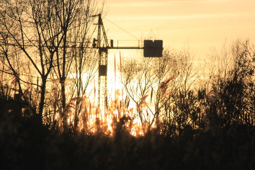 Gru al tramonto
