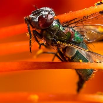 Honor to the fall fly - by Mario JR Nicorelli con Nikon D300s Macro fotografia - Macro Photography - Macro Foto