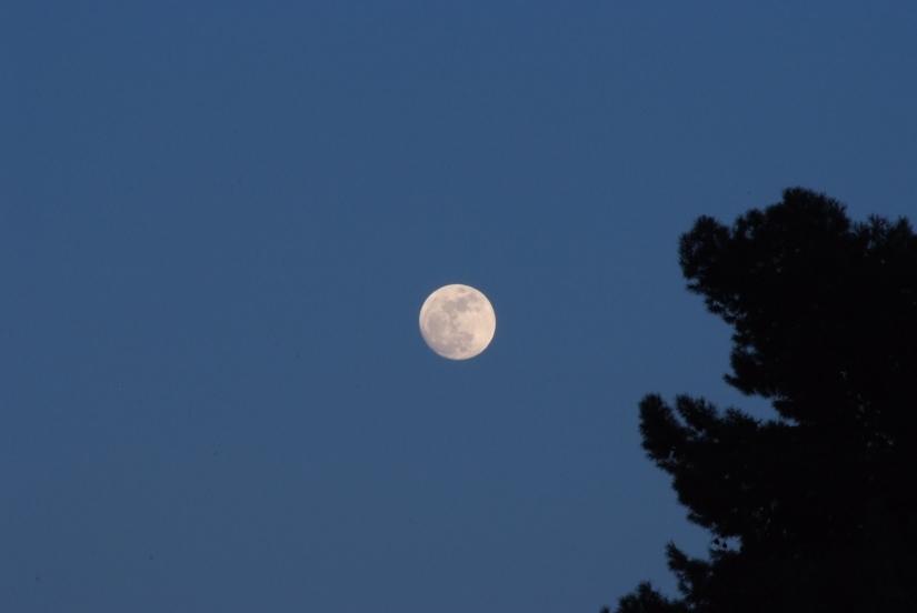 I campi di luna
