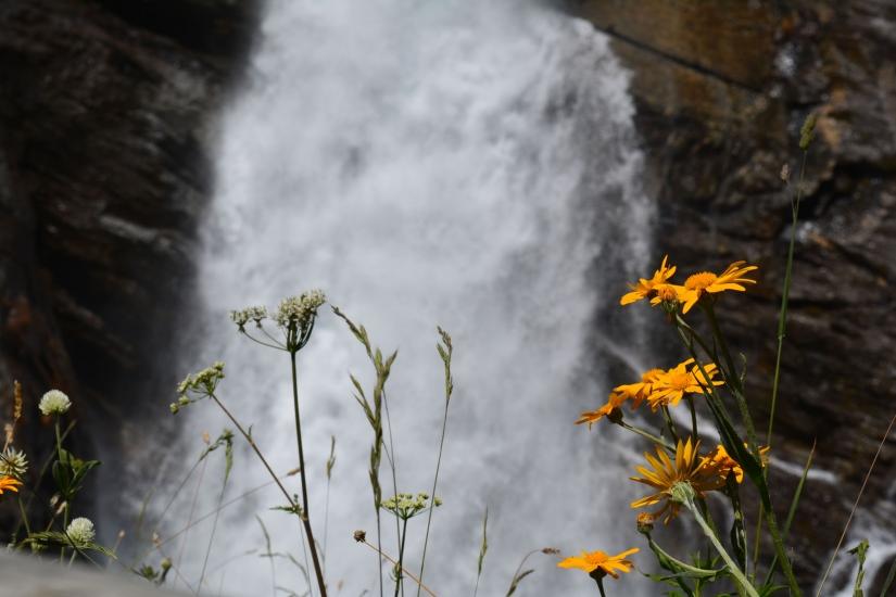 I fiori e la cascata
