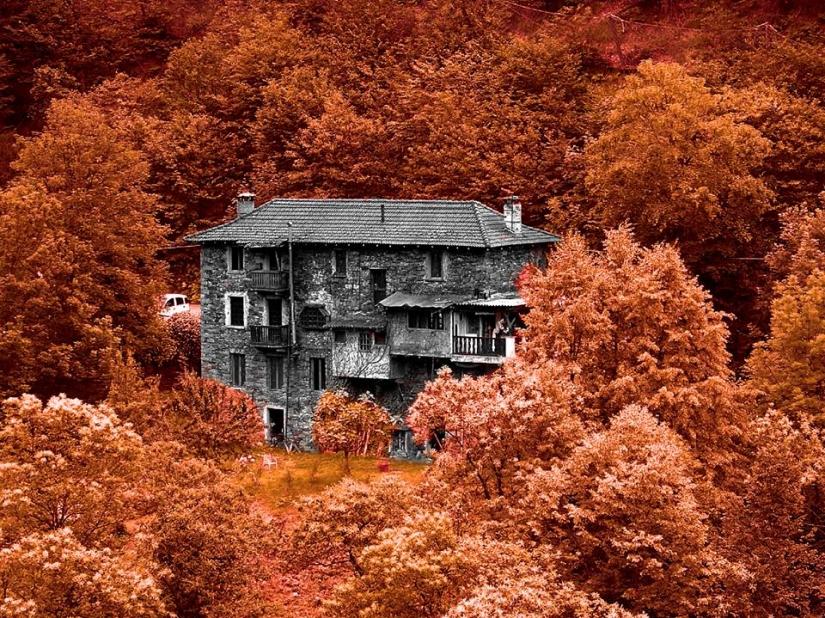 Il bosco rosso
