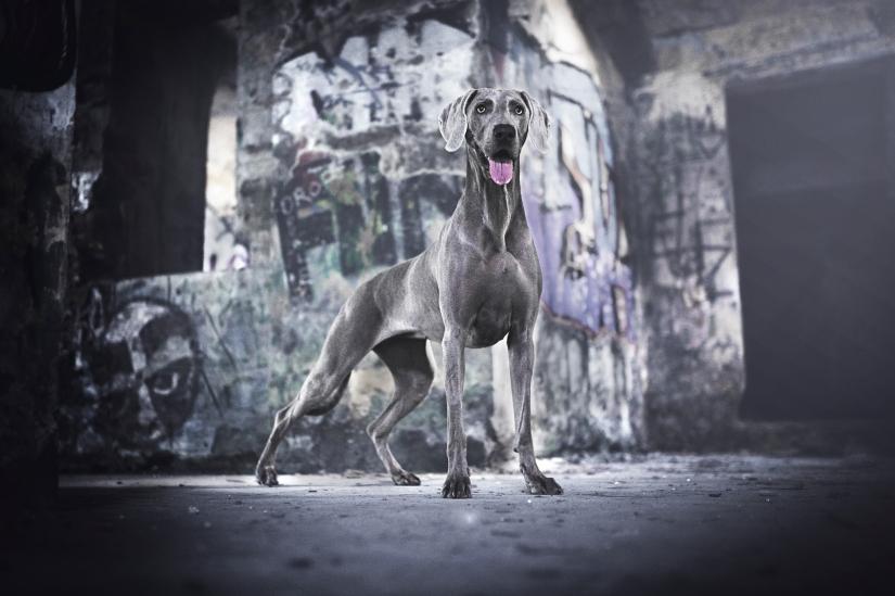 Il cane argentato