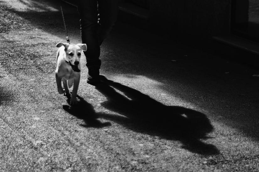 IL cane e l'ombra del padrone