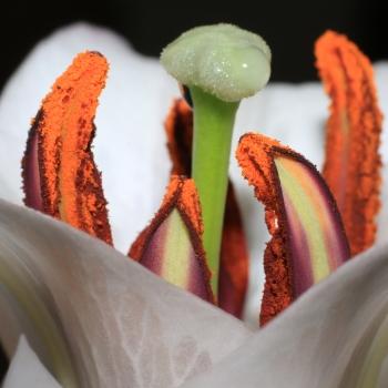 Il fascino di un fiore sta nelle sue contraddizioni