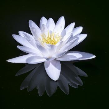 Il fiore è vita