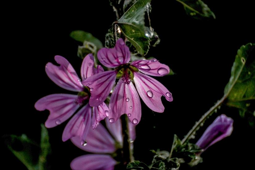 Il fiore e le sue gocce