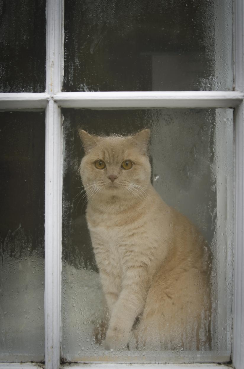 Il gatto.