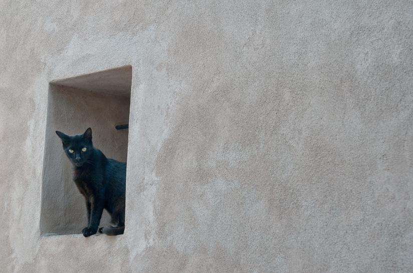 Il gatto nel muro