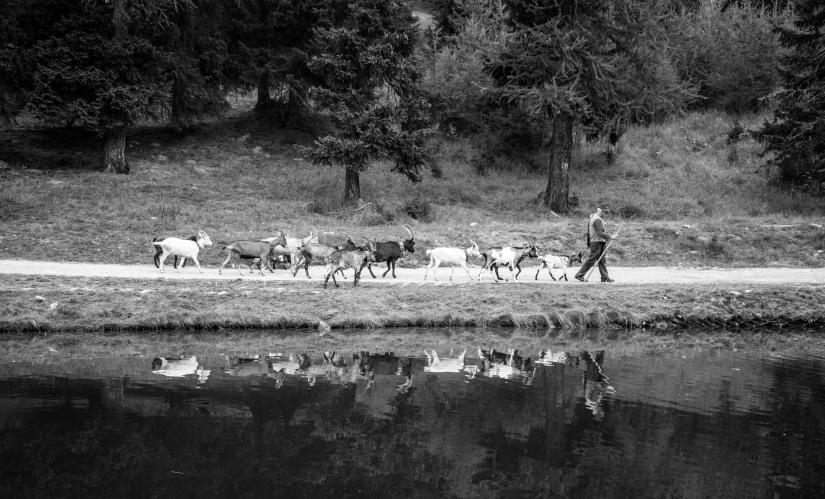 Il lavoro del pastore - Torgnon VdA