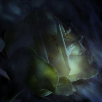 Il mistero della rosa