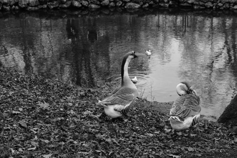 Il riposo delle pettegole  del laghetto