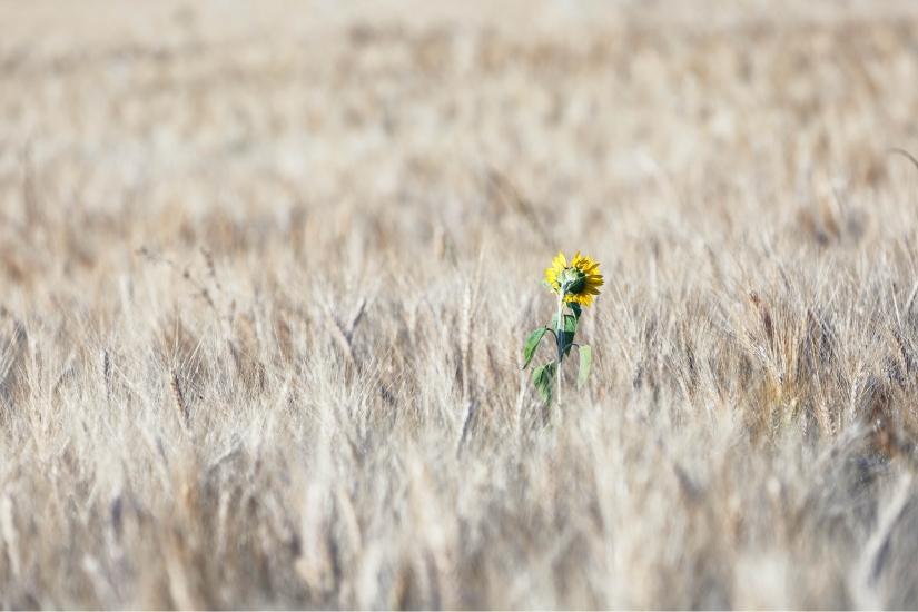 Il solitario