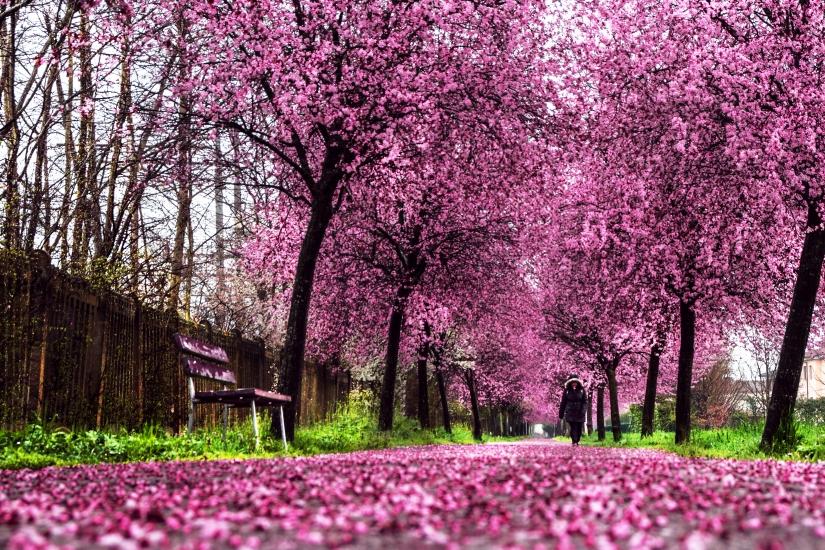 Il vialino in fiore