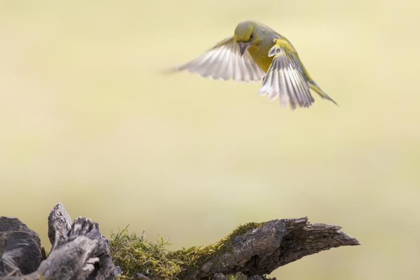 Il volo del Verdone