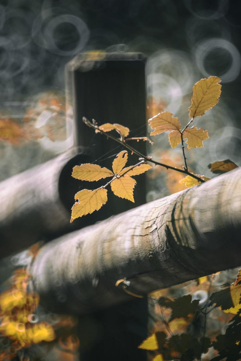Impressioni di Novembre: Autunno in Franciacorta