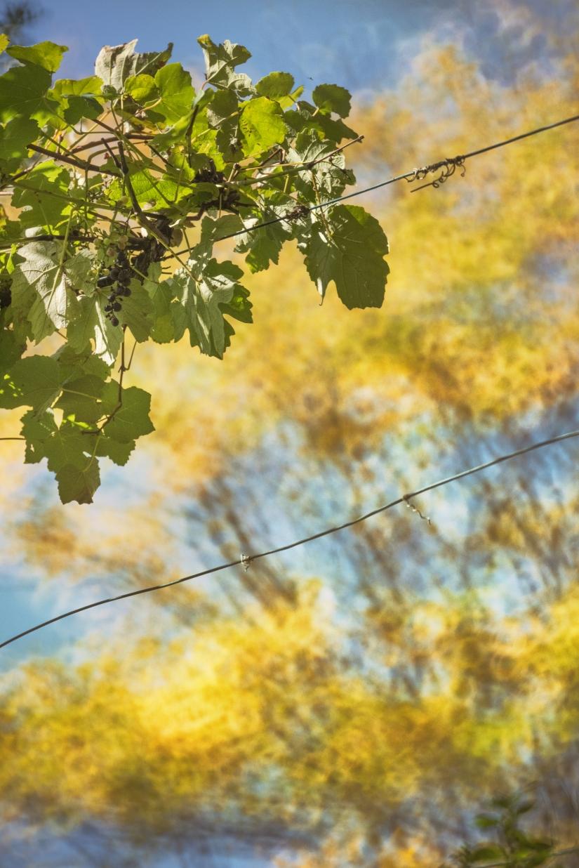 Impressioni di Novembre: L'autunno in Franciacorta
