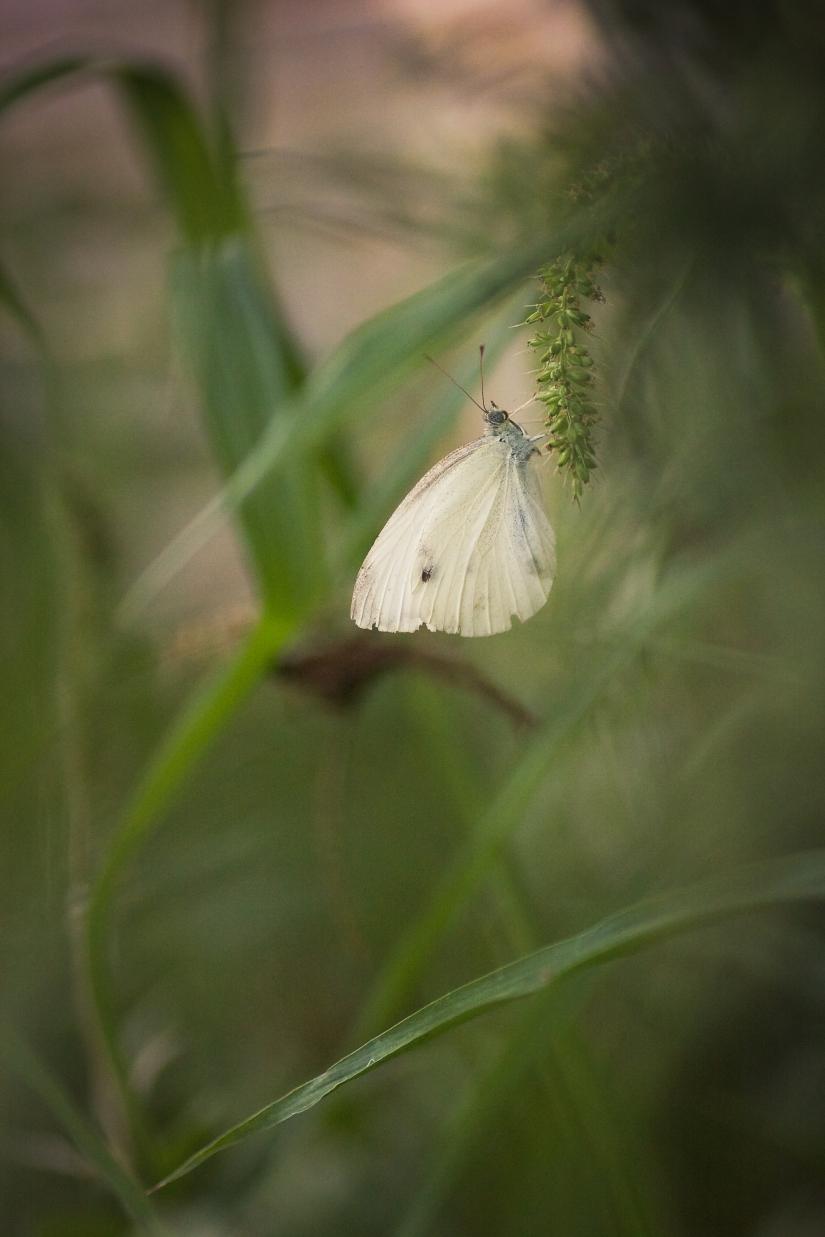 In giardino