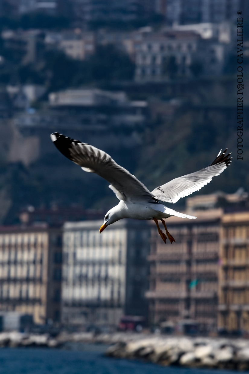 In volo sopra la città
