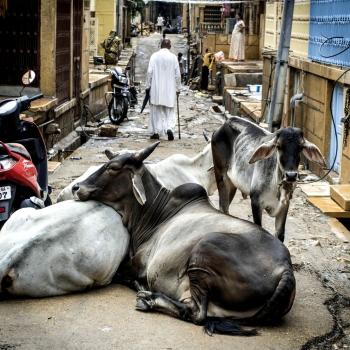 India, tra sacro e profano