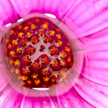 Interno di un fiore