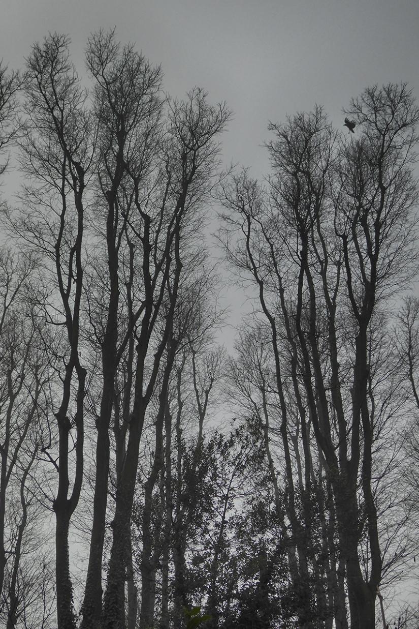 Inverno: c'è la nebbia che annienta i colori