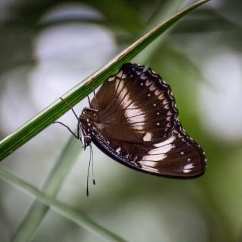 La casa delle farfalle - Bordano