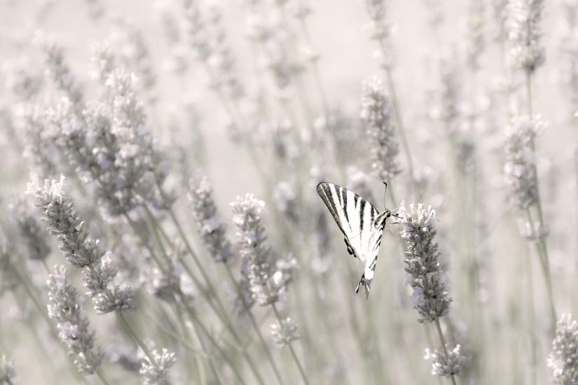 La farfalla sul fiore