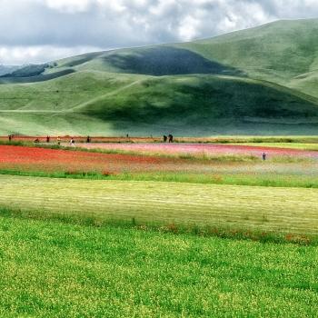 la fioritura a Castelluccio di Norcia