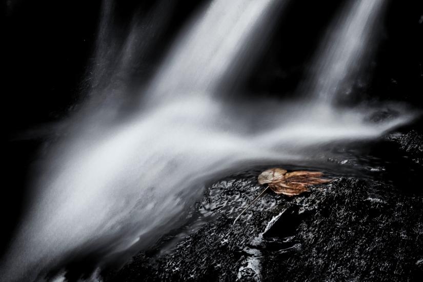 La foglia e il torrente