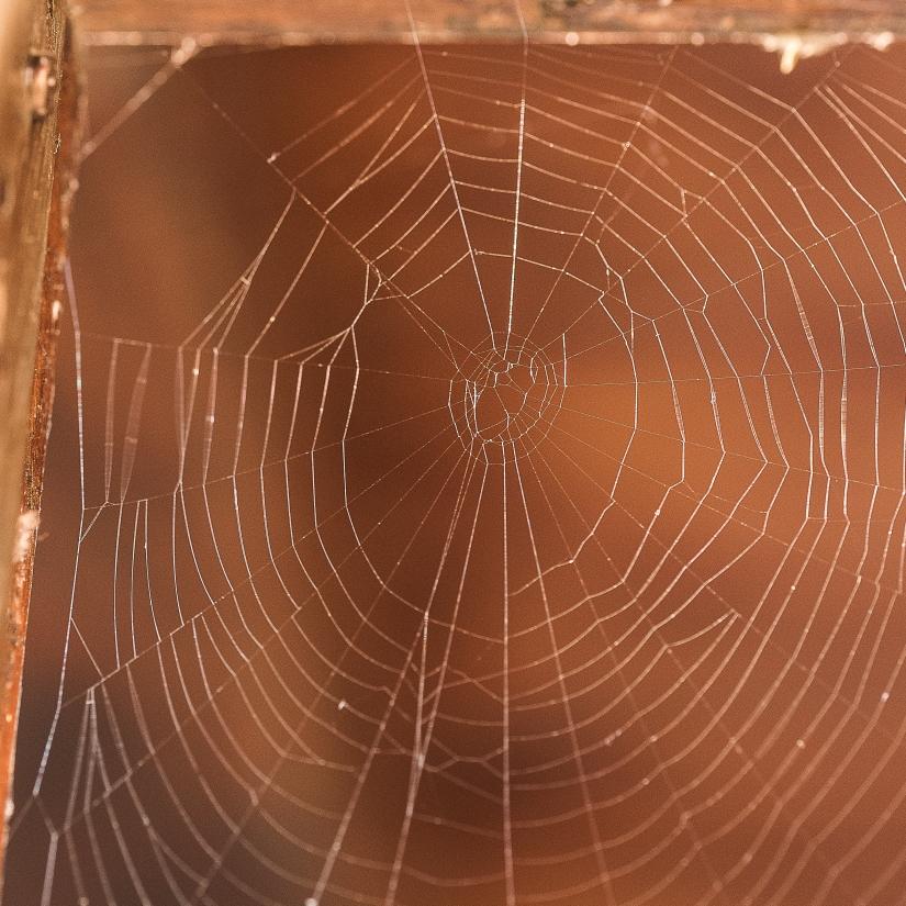 La geometria del ragno