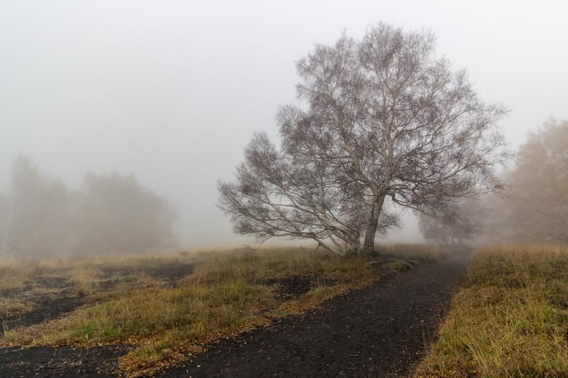 La solitudine di un albero