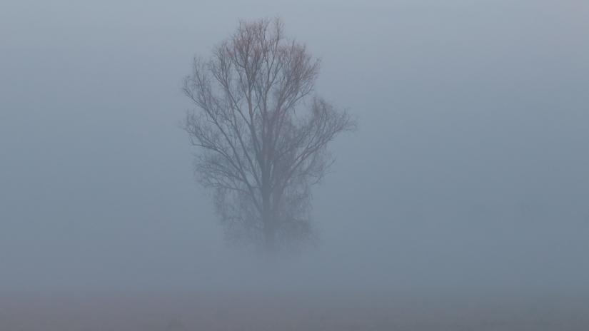 L'albero nella nebbia