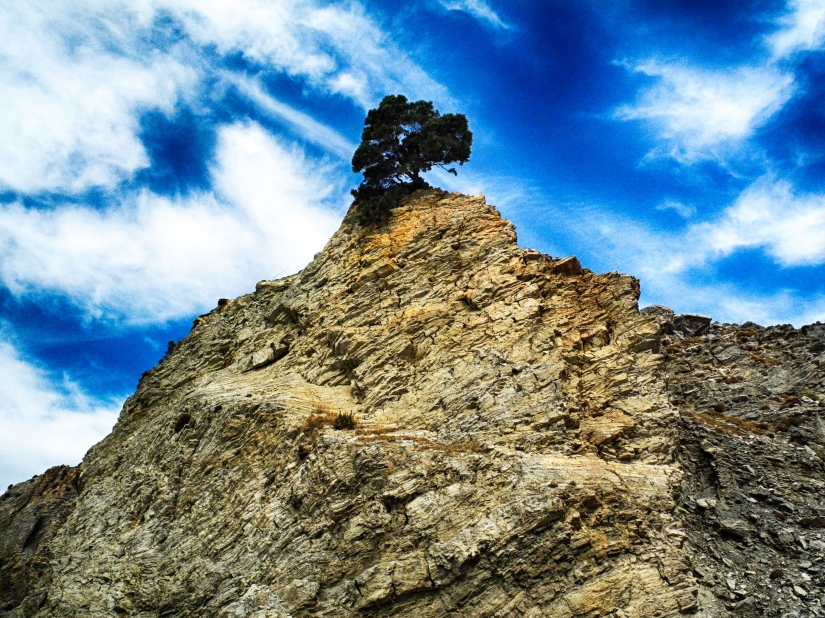 L'albero nella roccia
