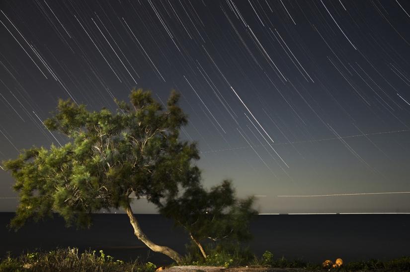 L'albero sotto le stelle