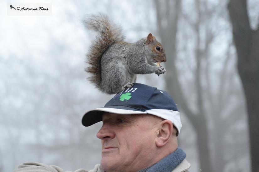 L'amico degli scoiattoli