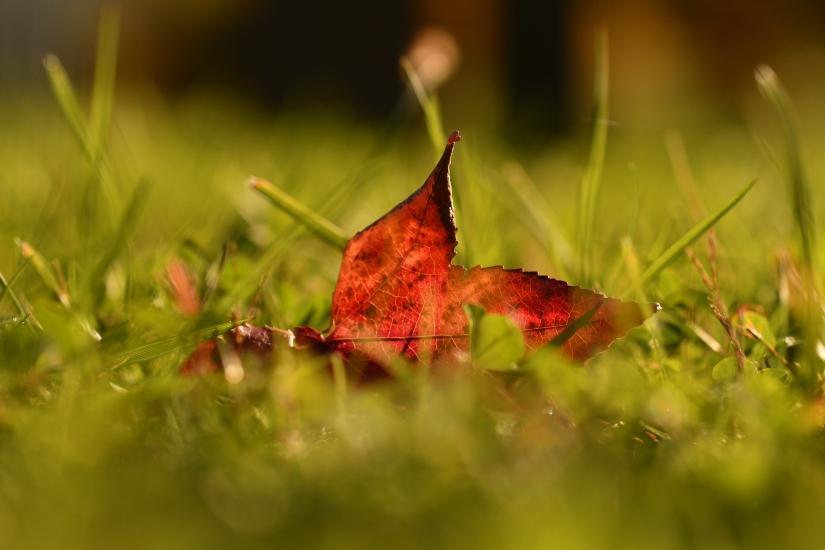L'autunno tra i fili d'erba