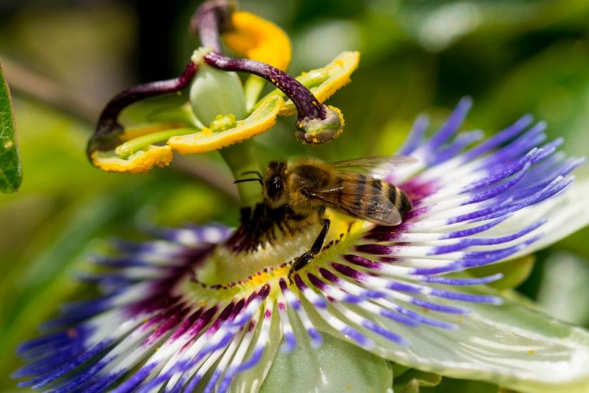 Lavora ape, lavora!
