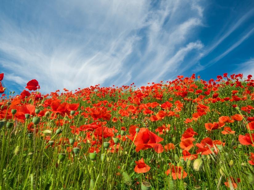 Le meraviglie della natura,  fiori