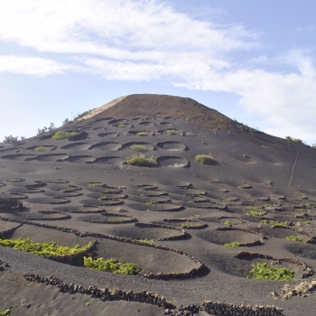 Life on the volcano