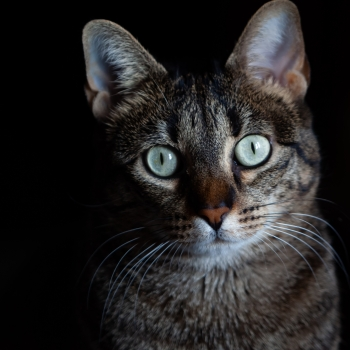 Lo sguardo del mio gatto
