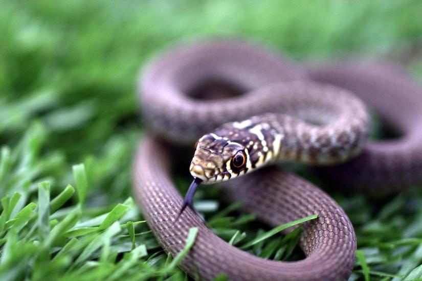 L,occhio del serpente