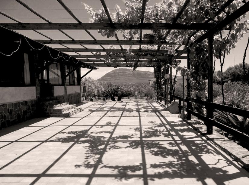 L'ombra della vite
