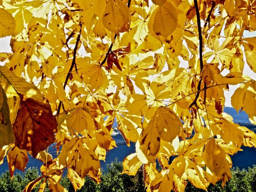 Luce di foglie